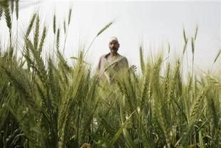 مصر ترفع نسبة البروتين المطلوبة في واردات القمح