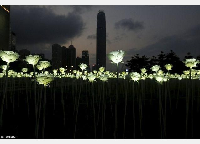 بالصور: هونغ كونغ تضيء 25 ألف وردة للفالنتاين