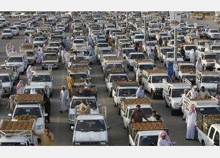 موسم تمور بريدة يوفر 3 آلاف فرصة عمل للسعوديين