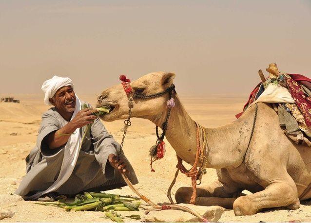 فيديو: سعودي يوقف طريق سريع ومعه رشاش.. لعبور إبله