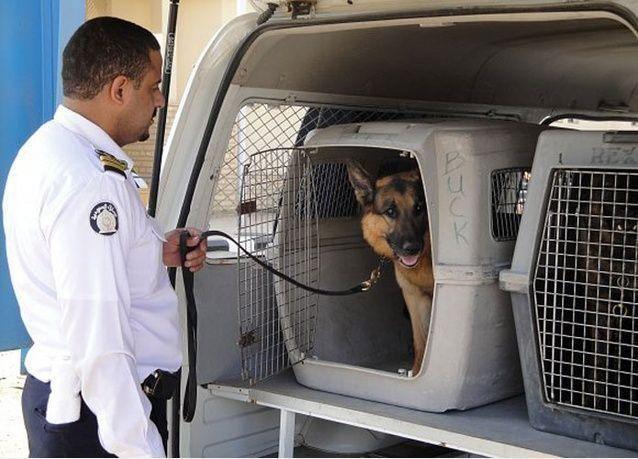 السلطات السعودية تنفق 38 مليون ريال على 1050 كلباً