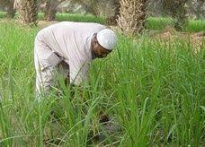 """محذراً من ارتفاع سعر القمح من 80 هللة إلى 5 ريال.. فلكي سعودي: """"أسبوع المطر"""" عوض استهلاك 74 عاماً"""