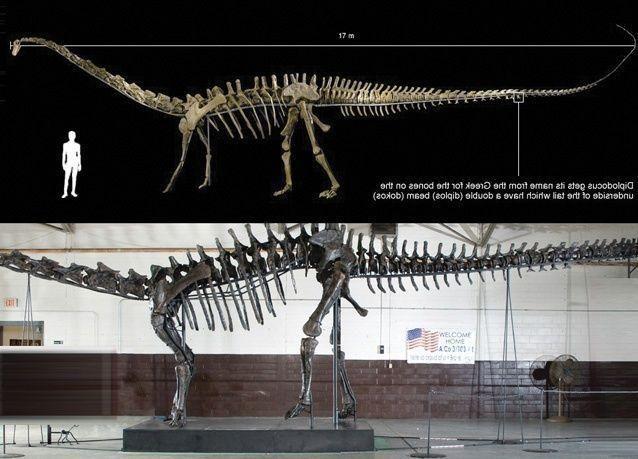 إعمار العقارية تشتري بقايا ديناصور عمره 150 مليون سنة