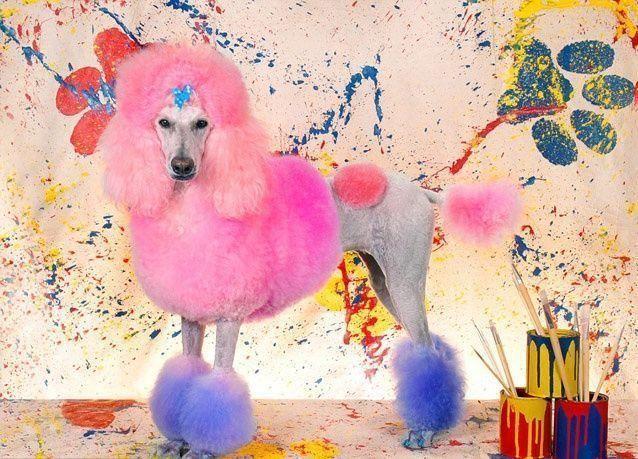 بالصور: أغرب مسابقة لتسريحات الكلاب