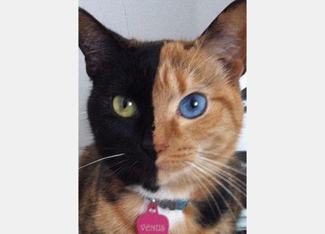 صور غريبة لقط بوجهين