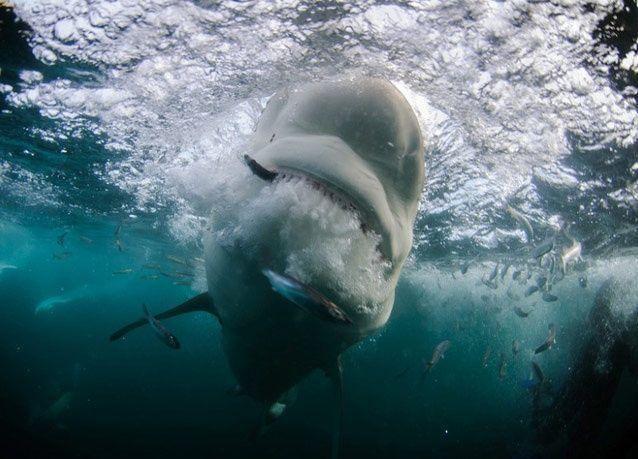 صور رائعة من أعماق البحار للمصور العالمي ألكساندر سافونوف