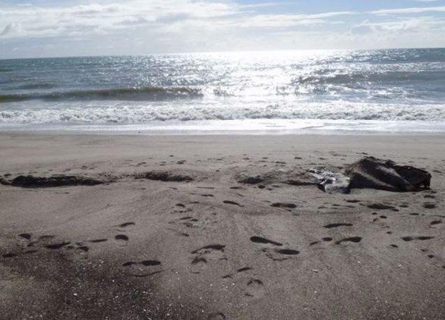بالصور: جثة مخلوق غامض تظهر على شاطئ في نيوزلندة