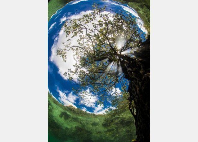"""أجمل الصور المشاركة في مسابقة """"أندونيسيا الدولية"""" للتصوير تحت الماء"""