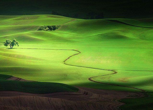 """الصور المشاركة في مسابقة """"ناشيونال جيوغرافيك"""" لعام 2013"""
