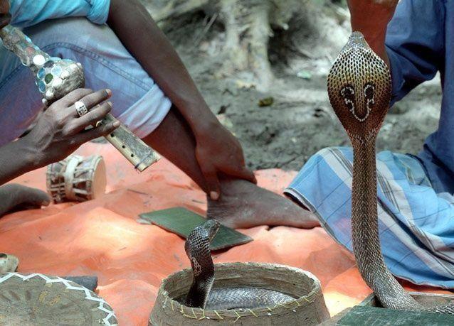 صور من مهرجان ثعابين الكوبرا في الهند