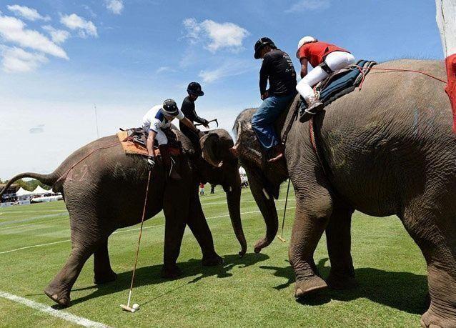 صور من كأس الملك لبولو الفيلة في تايلاند