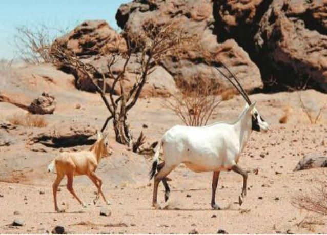 """أرامكو السعودية تعتزم إنشاء أكبر محمية طبيعية في """"الربع الخالي"""""""