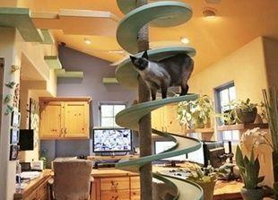 بالصور: 50 ألف دولار تكلفة تحويل منزل أمريكي إلى جنة للقطط