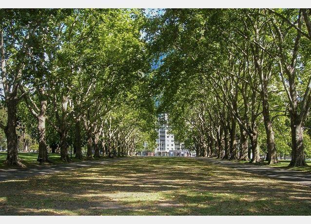 أشجار استراليا تتلقى سيلا من الرسائل الغرامية بعد تخصيص بريد إلكتروني لكل شجرة