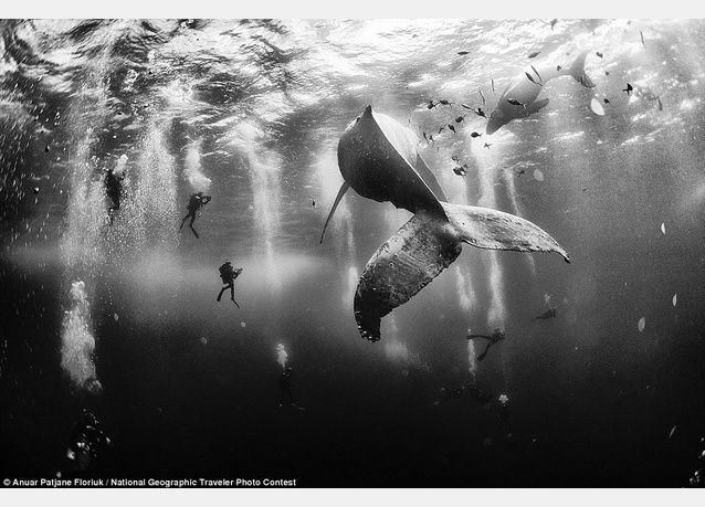 """شاهد الصور الفائزة بمسابقة ناشونال جيوغرافيك """"أفضل صور المسافرين """""""