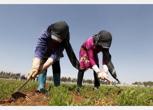 لاجئ سوري يرعى بذار نادرة لتأمين مستقبل الزراعة