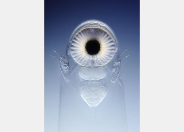 صور ميكروسكوبية مدهشة للحياة داخل قطرة ماء من مسابقة نيكون