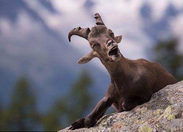 أطرف الصور الكوميدية للحيونات في مسابقة للحياة البرية