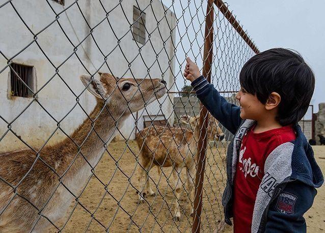 بالصور : مواطن سعودي يحول ساحة منزله إلى حديقة حيوان