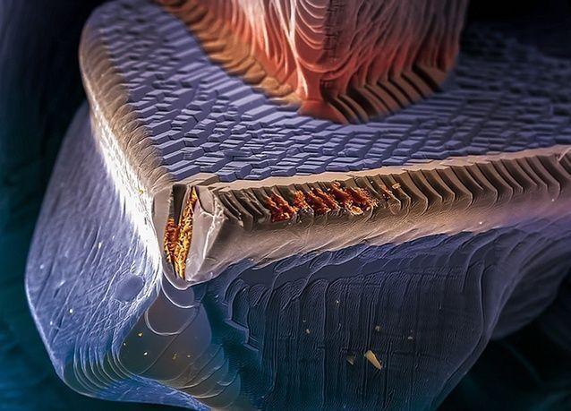 صور علمية فائزة بجائزة ويلكوم 2014