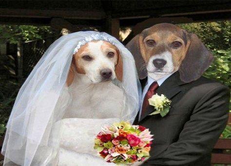 أميركية تنفق 250 ألف دولار لمراسم زواج كلبها
