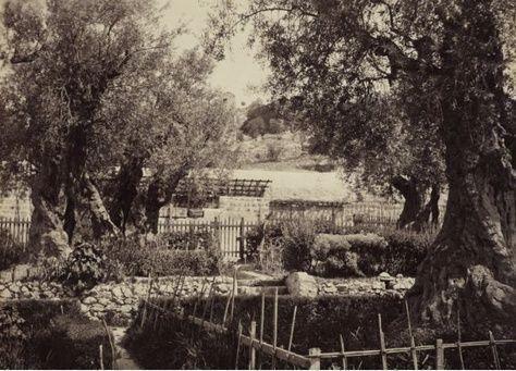 صور من 1862 لرحلة أمير ويلز من بيت لحم وجبل الزيتون في القدس إلى دمشق والأردن ومصر