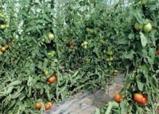 الإمارات تحقق 50 % اكتفاء ذاتيا من الإنتاج الزراعي