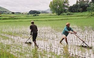 البنك الدولي يقول إن أسعار الغذاء تضغط على الفقراء في العالم