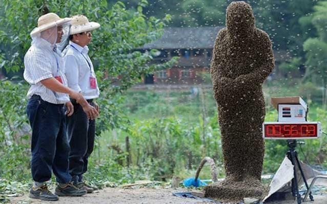 صور مسابقة رجل النحل