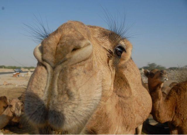 السعودية: 26 حالة إصابة جديدة بفيروس كورونا