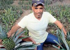 إماراتي يزرع الفاكهة في أرض رملية