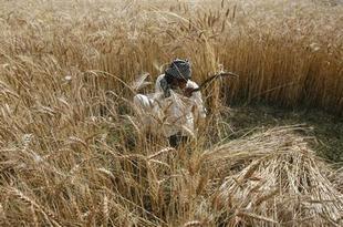 بافا الروسية تعرض أراض زراعية على مستثمرين في الخليج