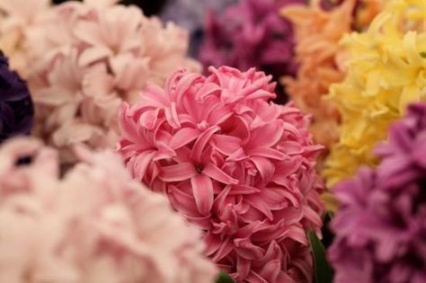 60  مليون درهم حجم الواردات الإماراتية من النباتات والزهور خلال النصف الأول