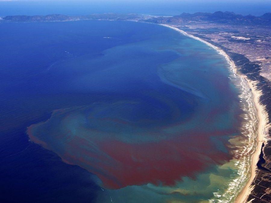 الإمارات تحذر من نشاط للمد الأحمر في المياه الإقليمية