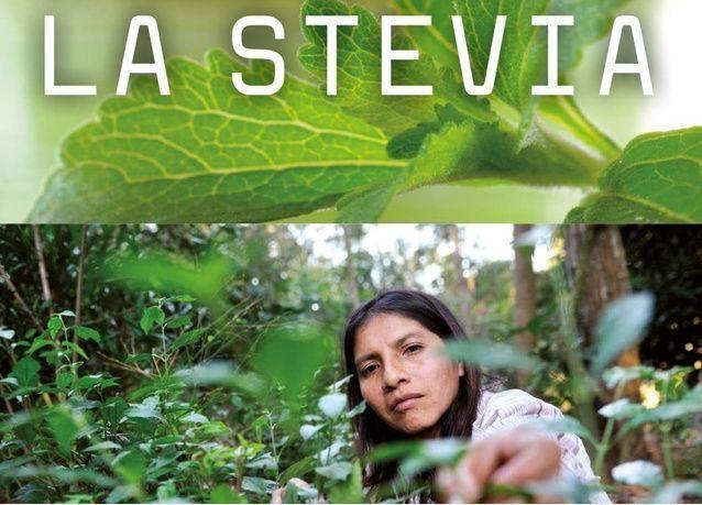 تعرف على ستيفيا التي تفوق في حلاوتها السكر بـ 350 مرة