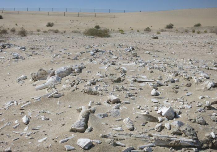 اكتشافات أثرية جديدة في جزيرة مروح وموقع بينونة تحكي تاريخ سكان أبوظبي الأوائل