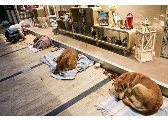 بالصور : متجر في تركيا يحتضن الكلاب الضالة خلال موجة البرد