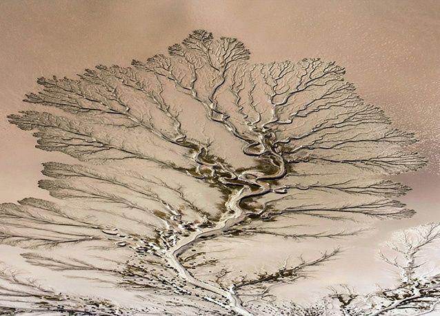 صور جوية مدهشة لنهر كولورادو يبدو كالأشجار العملاقة