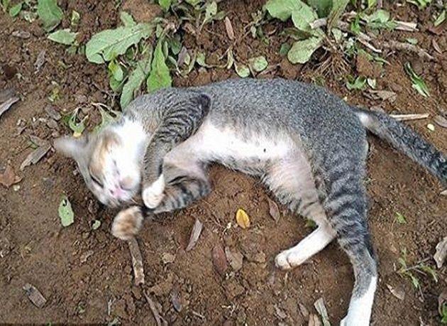 بالصور : قطة وفية تعيش فوق قبر صاحبتها منذ وفاتها