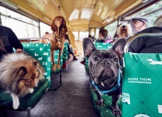 بالصور : إطلاق أول حافلة سياحية للكلاب في لندن
