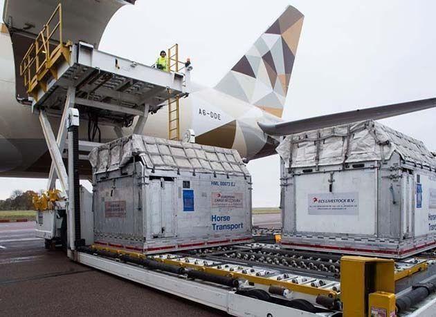 """بالصور : شاهد كيف نقل """"طيران الاتحاد"""" 72 خيلاً من لندن إلى الكويت"""