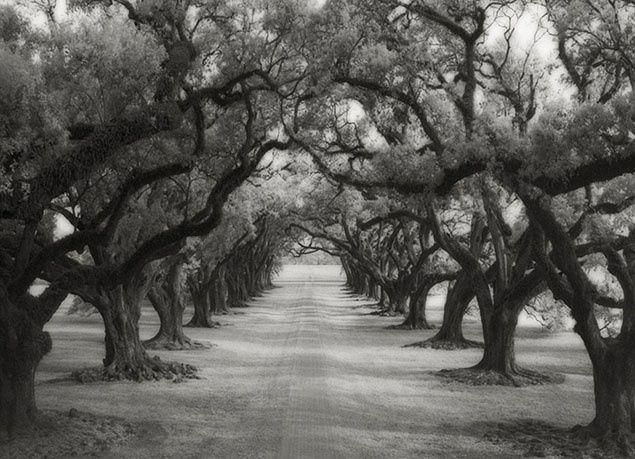 صور مذهلة لأقدام الأشجار المعمرة في العالم