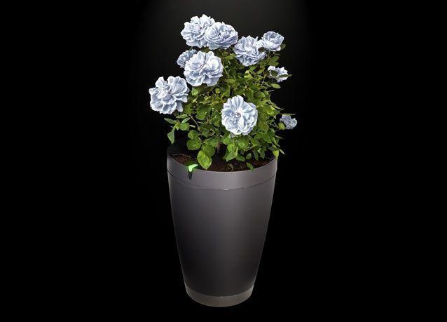 أحدث صيحات التقنية.. إطلاق وعاء ذكي للنباتات يقوم بالتحليل والري التلقائي