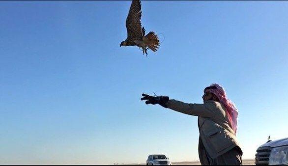 25 مليون يورو مكافأة لمعلومات تساعد في تحرير قطريين مختطفين في العراق