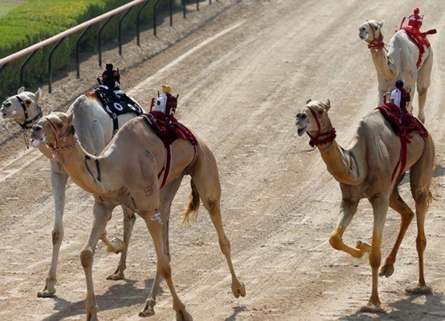 """بالصور : حمدان بن محمد يتسلم سيف الإمارات بفوز """"تكريم"""" في """"ختامي المرموم"""""""