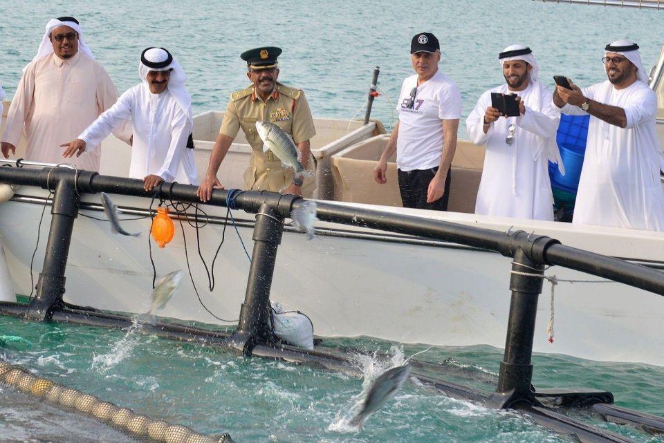 طرح 3000 سمكة من الهامور والسبيطي قبالة سواحل دبي