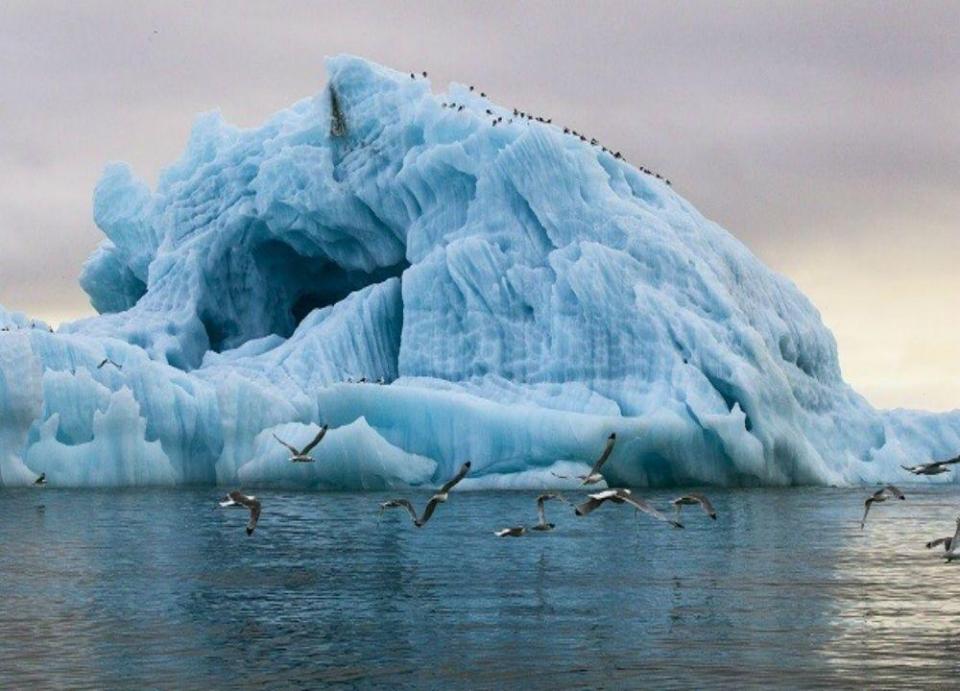 أبوظبي تعلق على مشروع نقل جبال جليدية إلى الإمارات