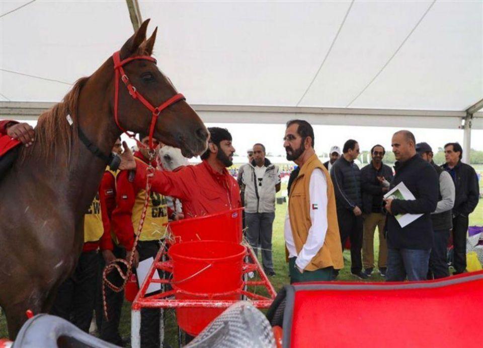 محمد بن راشد يشهد إنجاز فرسان الإمارات في سباق كأس ويندسور الملكي للقدرة