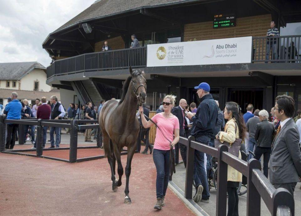 انطلاق الجولة الثانية من كأس رئيس الإمارات للخيول العربية الأصيلة في فرنسا غدا