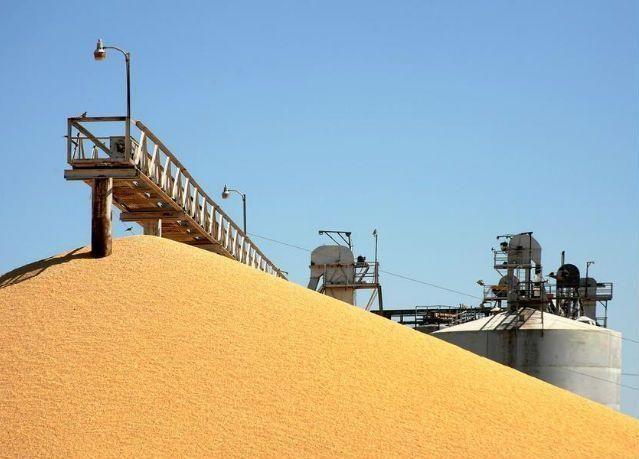 بونجي الأمريكية وأراسكو تسعيان لشراء أنشطة لمؤسسة الحبوب السعودية
